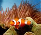 Finding_Nemo_Movie_78f5